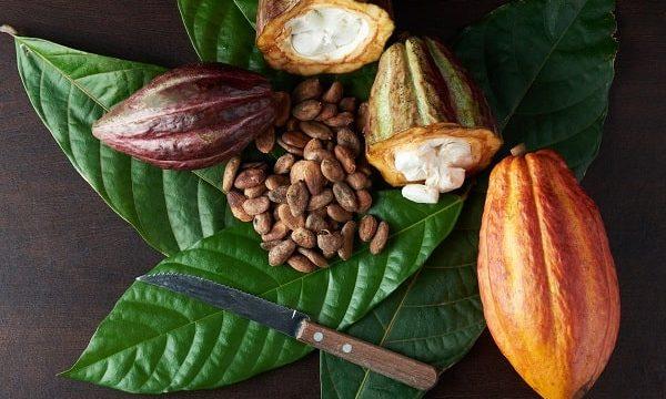cocoa-market